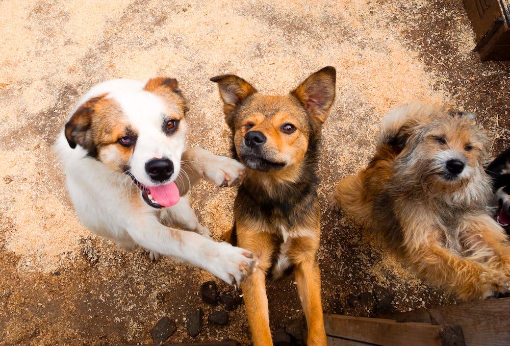 Footprints of Joy Animal Shelter
