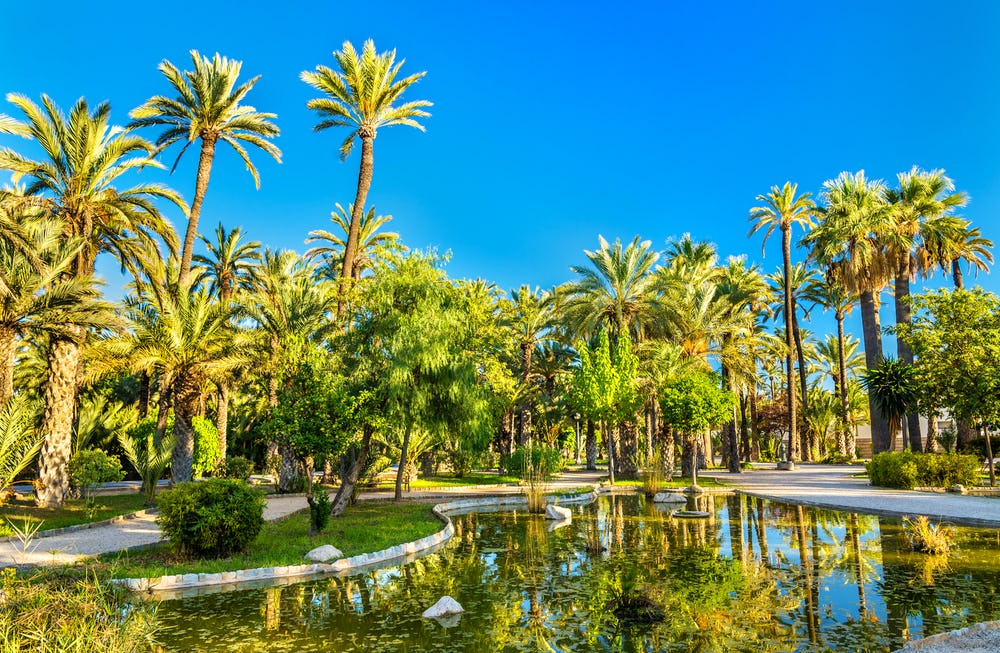 Palmeral of Elche